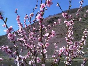 Frühling Mosel 2